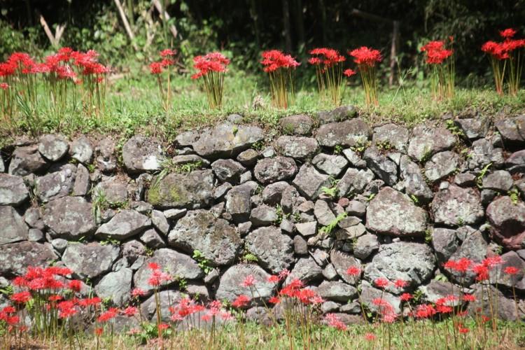潜龍院跡の石垣