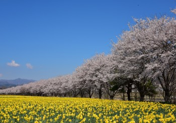 2019年4月岩井親水公園にて撮影